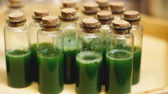 растителна фюжън кухня – в лабораторията на веганския ресторант Соул Кичън